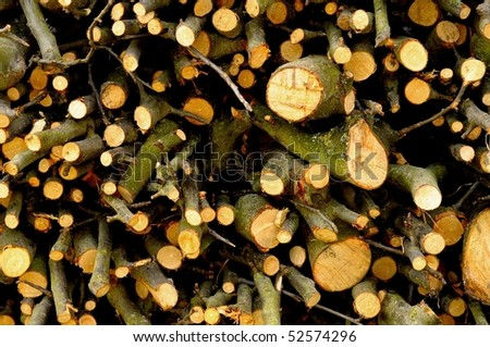 Background of small firewood branches