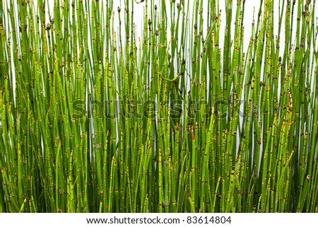 background of small green bamboos