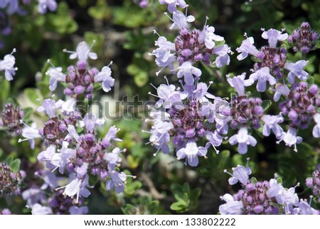 Background of small purple flowers.