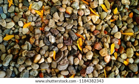 Background of small stones and small leaves                               #1184382343