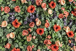 Background of spring artificial red chrysanthemums and peony roses in the garden. Spring. Blooming wall
