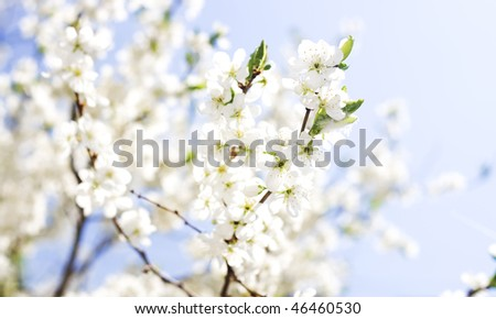 background of spring flowers