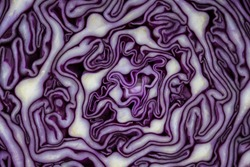 Background of the blue cabbage in the cut, macro photography. Close up, top view. Texture raw purple cabbage