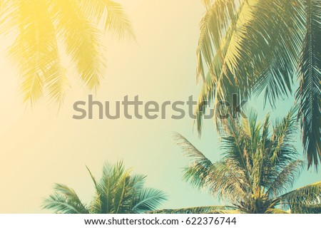 Background of the branches of tropical palm trees, the sky in vintage style. Toning - Shutterstock ID 622376744