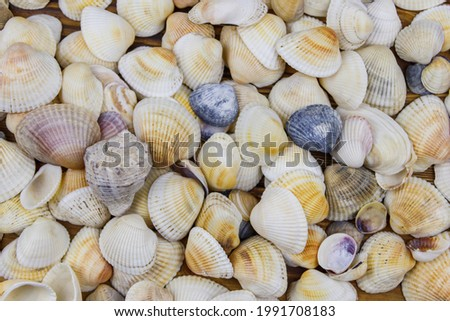 Background of the sea shells. Summer vacation concept