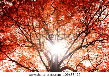 Background of the tree autumn.