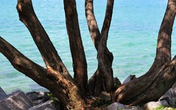 Background of tree bark branches with shadows growing out of the ground with blurred ocean water in the background