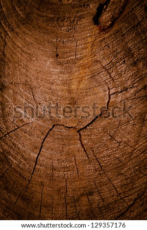 background of tree rings