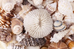 background of various kind of seashells, close up.