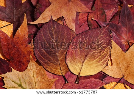 background of warm colored autumn leafs