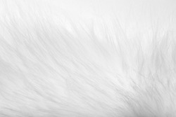 background of white fur