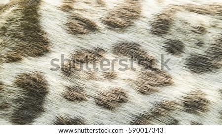 Shutterstock Background of wild feline cat fur