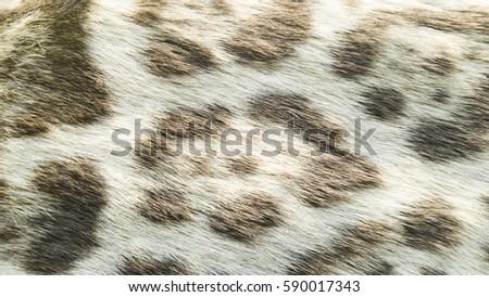 Shutterstock Background of wild feline cat fur