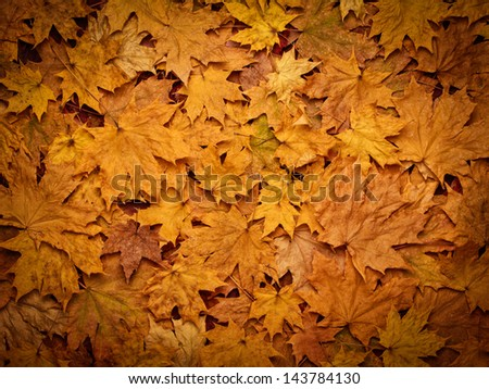 background of yellow autumn leaves with vignette
