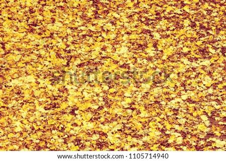 Background or texture of fallen autumn fall season foliage tree leaves.
