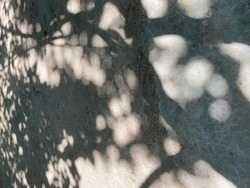 Background or texture of light and shadow on the ground.