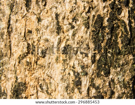 Background or texture of old wall tree