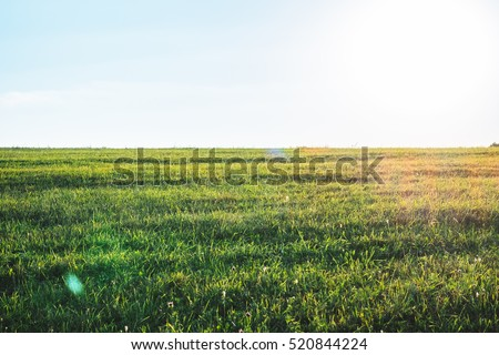 Background photography of bright sunny lush grass field under blue sunny sky. Outdoor countryside meadow nature. Rural pasture landscape of plain grass background. Agricultural grass field pastures #520844224