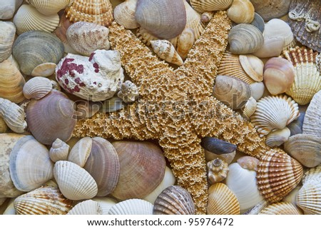 Background picture - lots of shells with starfish