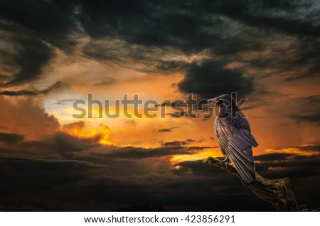 background, Raven on stormy sunset. (illustration of a fictional situation, in the form collage of photos)