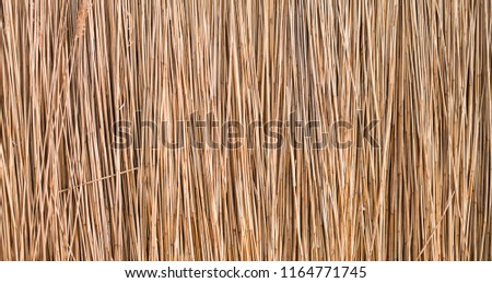 background reeds, texture of reeds or straw on the wall, fence of reeds #1164771745
