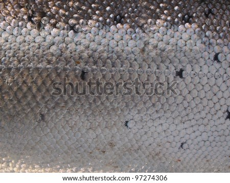 background salmon's skin with scales