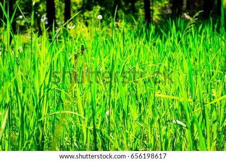 Background sun brightly lit green grass outdoors summer bright day very beautiful #656198617