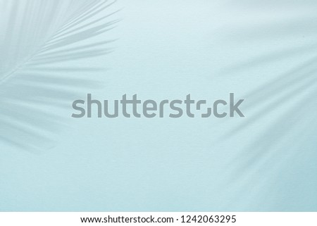 Background template template in pastel blue colors with palm leaf shadow #1242063295