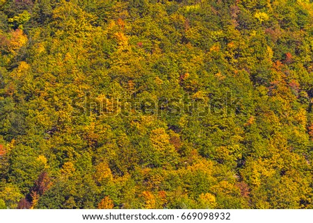 Background, texture, autumn trees, shades of yellow, shades of orange, shades of burgundy.