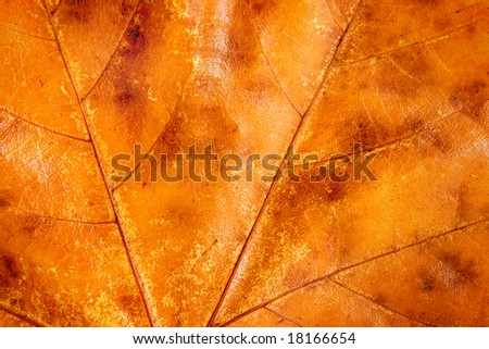 Background texture close up of golden Fall leaf