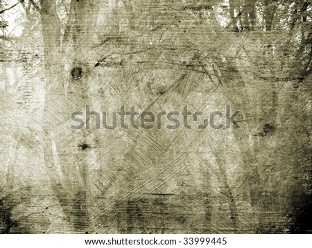 Background texture forest landscape
