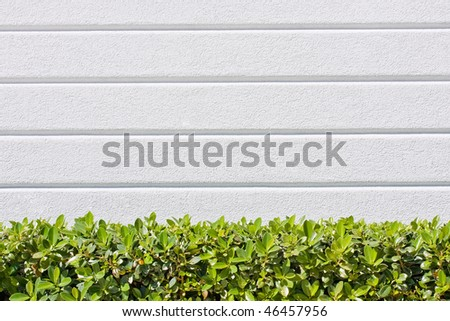 background texture from a white wall with parallel horizontal lines and green plants