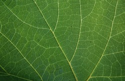 background texture green leaf structure macro photography
