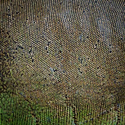 background texture iguana skin