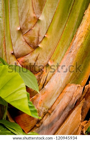 Background Texture Image of a Tropical Plant with Green, Yellow, and Brown Colors