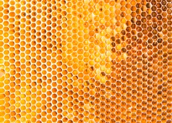 Background texture of a section of wax honeycomb from a bee hive filled with golden honey |. Beekeeping concept