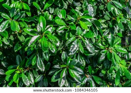 Background texture of a succulent green grass. Best green plant background texture