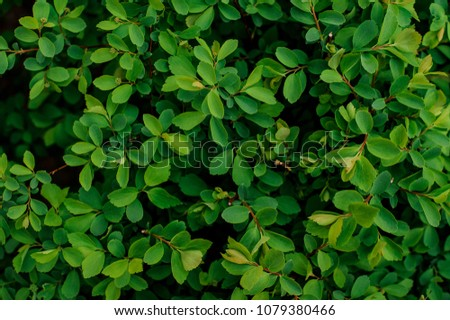 Background texture of a succulent green plant. Best green plant background texture for your design