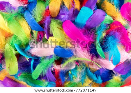 Background texture of brightly colored dyed bird feathers in the colors of the rainbow or spectrum in a random pile viewed from above in a full frame view #772871149