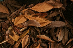 background texture of brown dry leaves scattered on ground