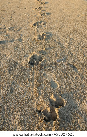 Free Cow footprint in nature,thailand Photos | Avopix.com