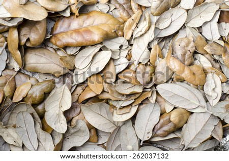Background texture of dead brown leaves from a live oak tree