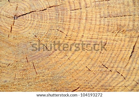 Background Texture Of Freshly Cut Wood