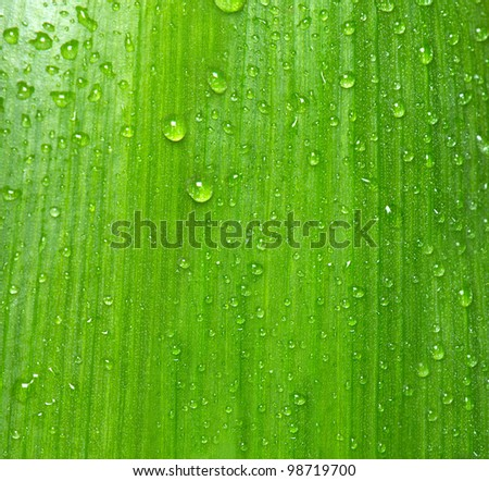 background texture of green leaf with water drops. selective focus