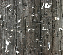 background texture of old telephone pole with staples and ripped paper