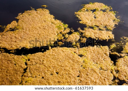Background texture pattern of algea forming thick layer on water surface.