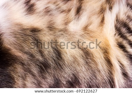 Background texture striped cat fur, wool close up #692122627