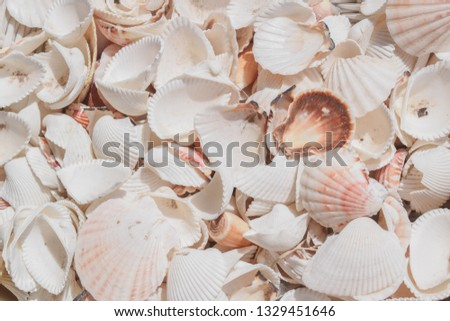 Background texture wallpaper picture of a bunch of seashells in summer.