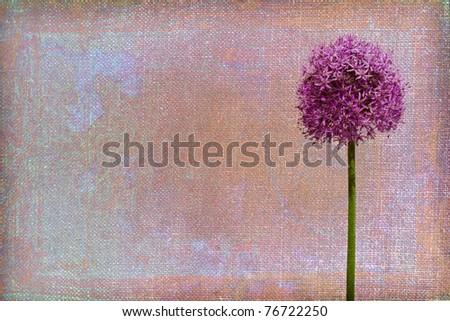 Background texture with allium blossom