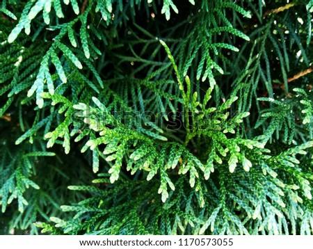 Background texture with juniper, cypress, plant, bush, green, evergreen, fir, conifer, needles, forest, fern and horsetail. #1170573055